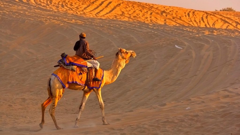 Camel Ride at Sand Dunes