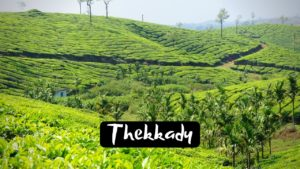 11 Famous Tourist Places to visit in Thekkady for Incredible Experience