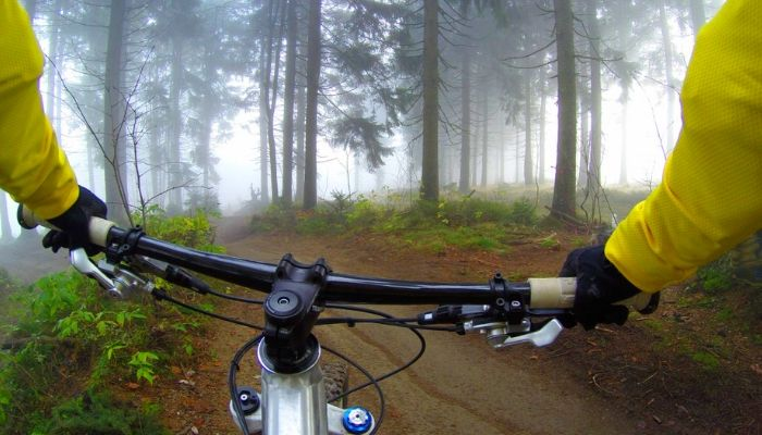 Cycle ride in the forest