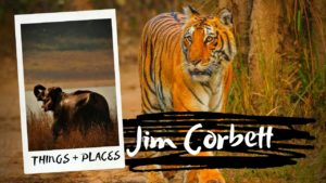 Things To Do & Tourist Places to Visit in Jim Corbett
